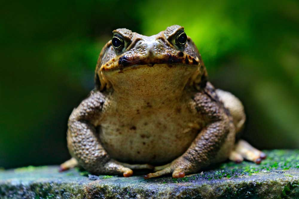 Frog Symbolism & Meaning: Spirit, Totem, & Power Animal