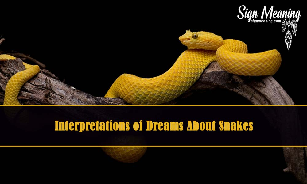 snake dream meaning interpretation