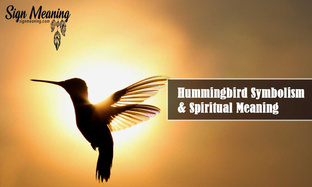 Hummingbird Symbolism and Spiritual Meaning: Everything You Need To Know