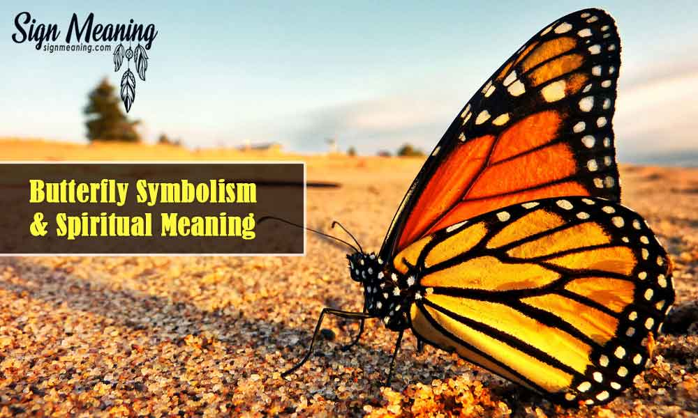 What Does It Mean When You See A Butterfly – Butterfly Spiritual Meanings