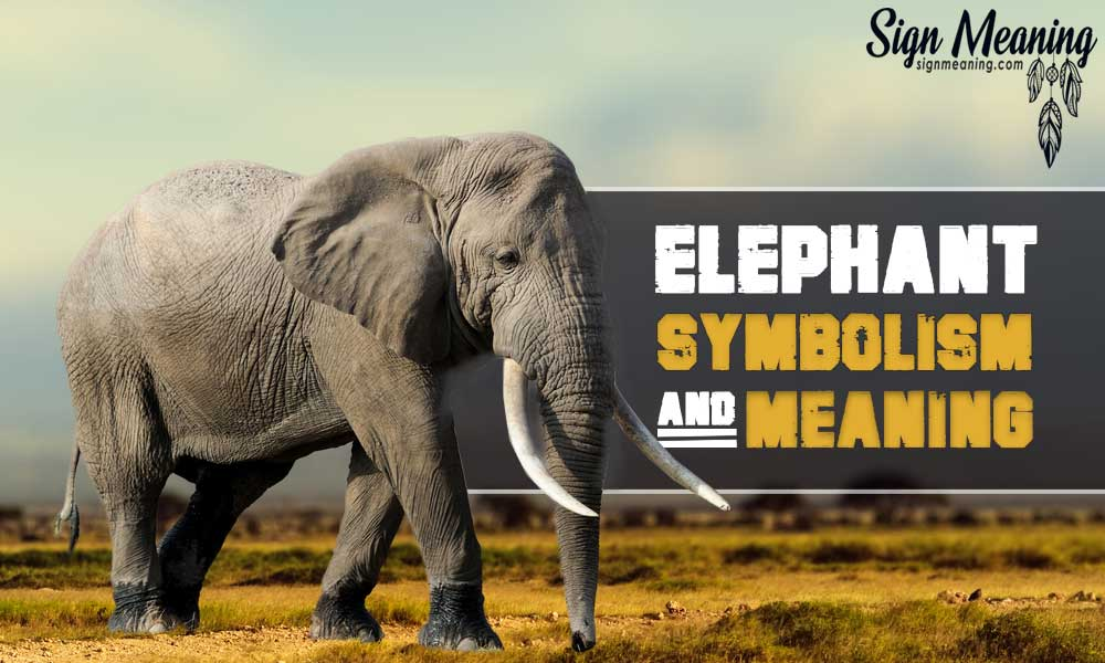 Elephant symbolism and meaning