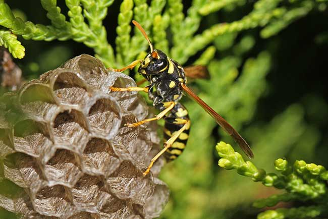 biblical meaning of wasps in dreams