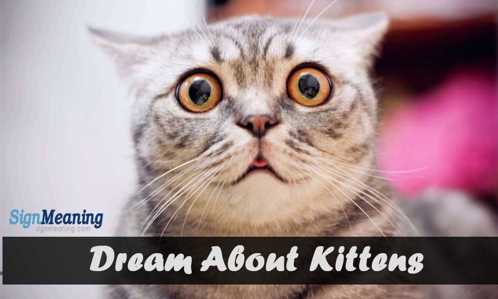 dreaming about kittens