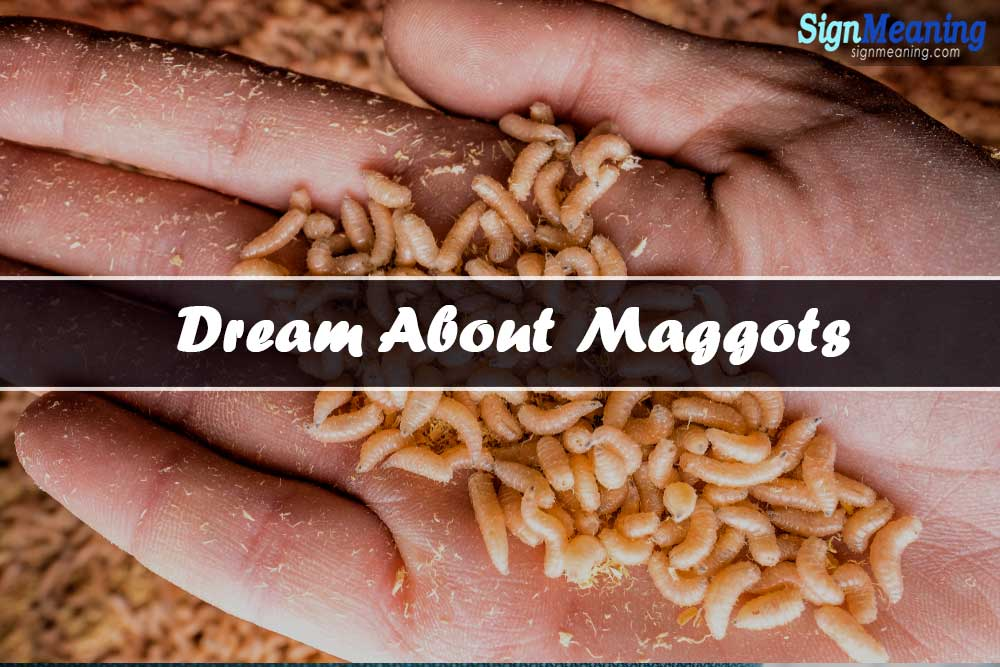 dreams about maggots