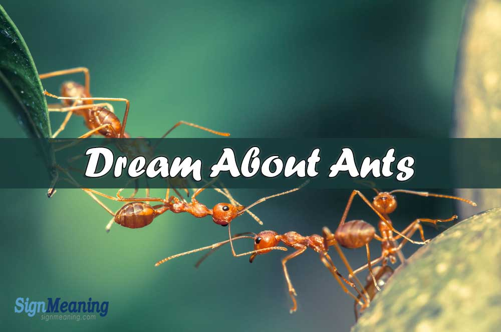 Dream About Ants – Symbolic Meaning And Interpretations