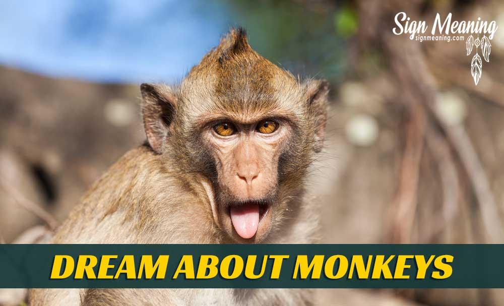 dream about monkeys