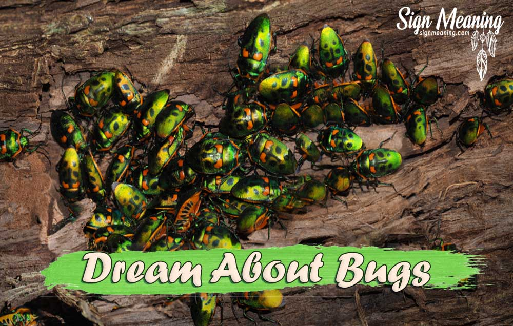 dream about bugs