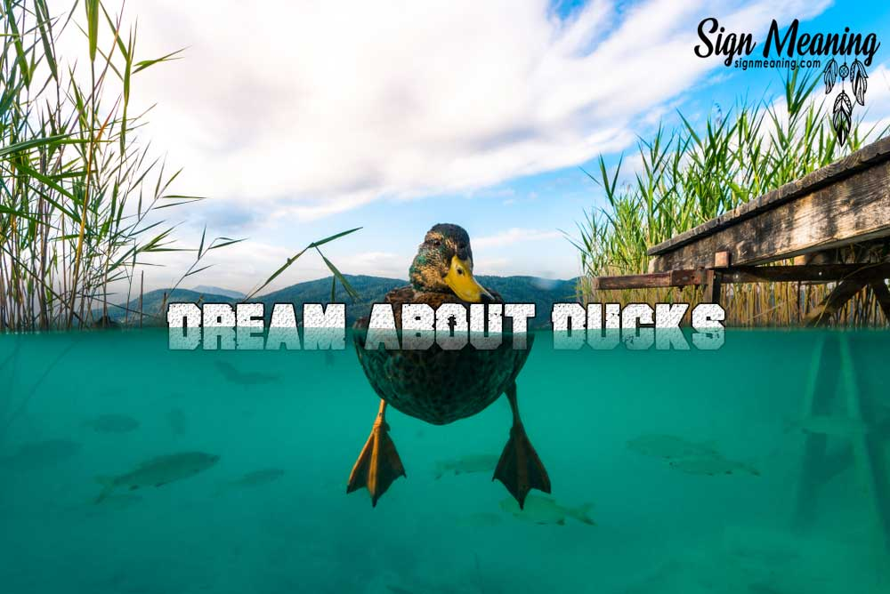 Dreaming about Ducks – Meaning and Interpretation