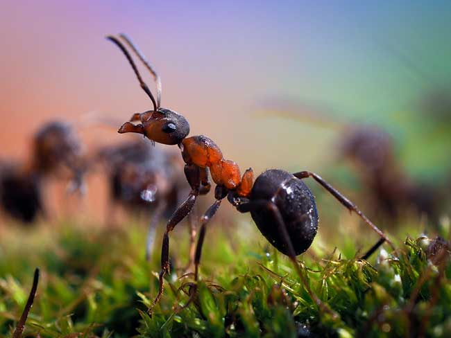 spiritual meaning of ants