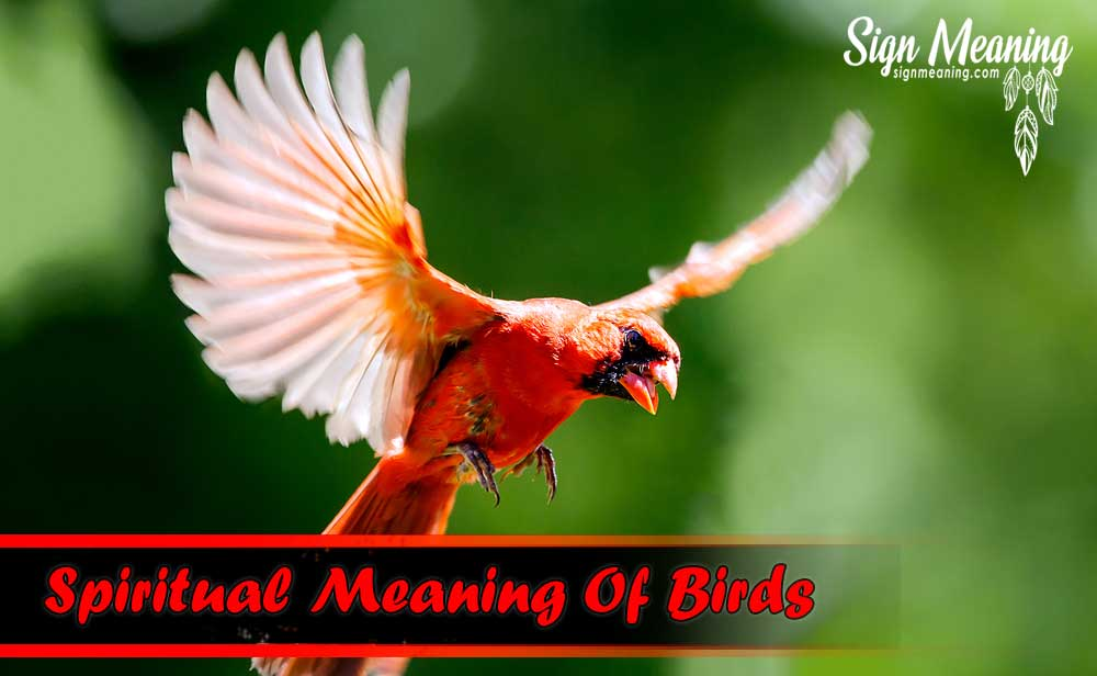 What Does It Mean When You See A Red Bird ? - Sign Meaning