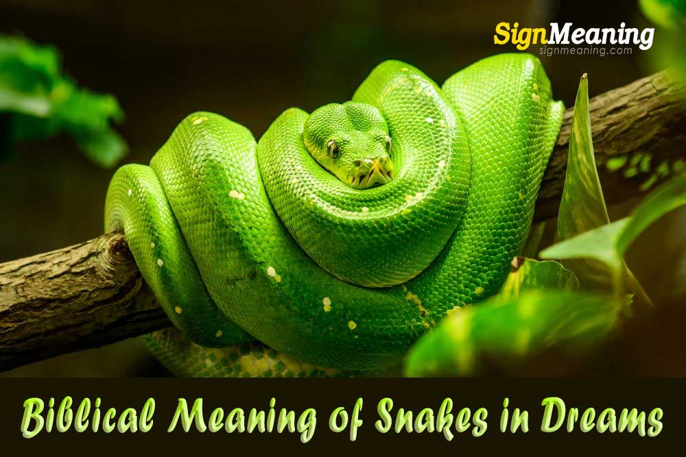 biblical meaning of snake in dreams