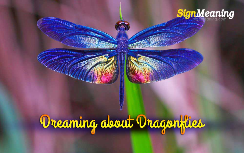 dreams about dragonflies