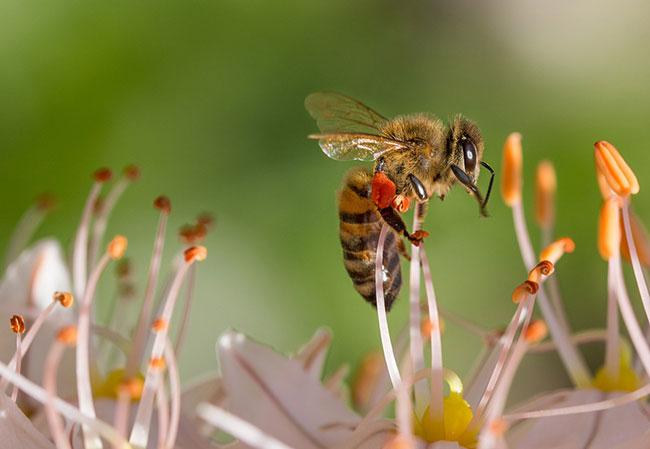 Seeing Bees in dreams