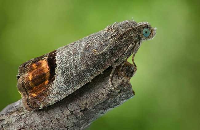 Black Moth Symbolism