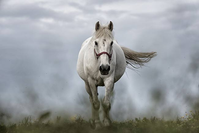 Dreaming about White Horses