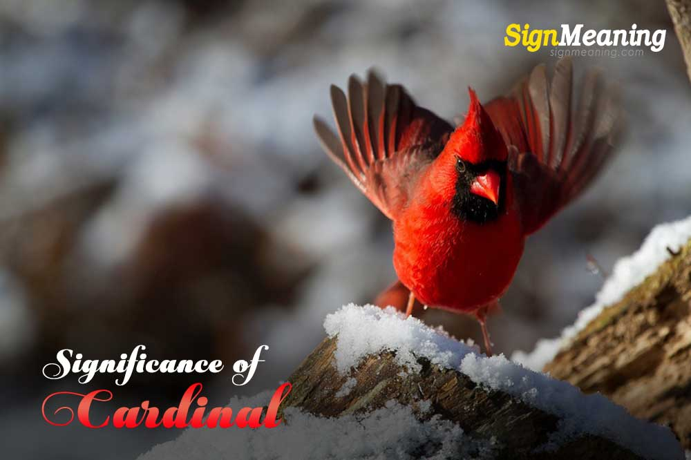 Symbolism Behind the Red Bird: What Does It Mean When You See A Cardinal?