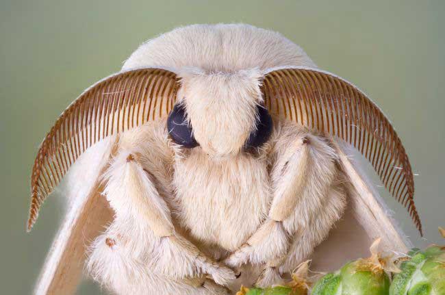 White Moth Symbolism