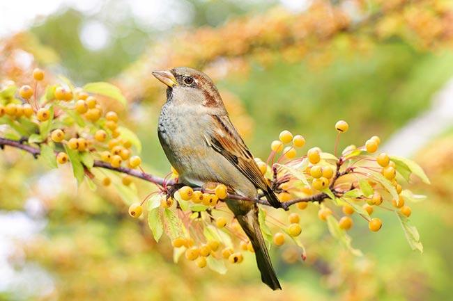 Sparrow bird meaning