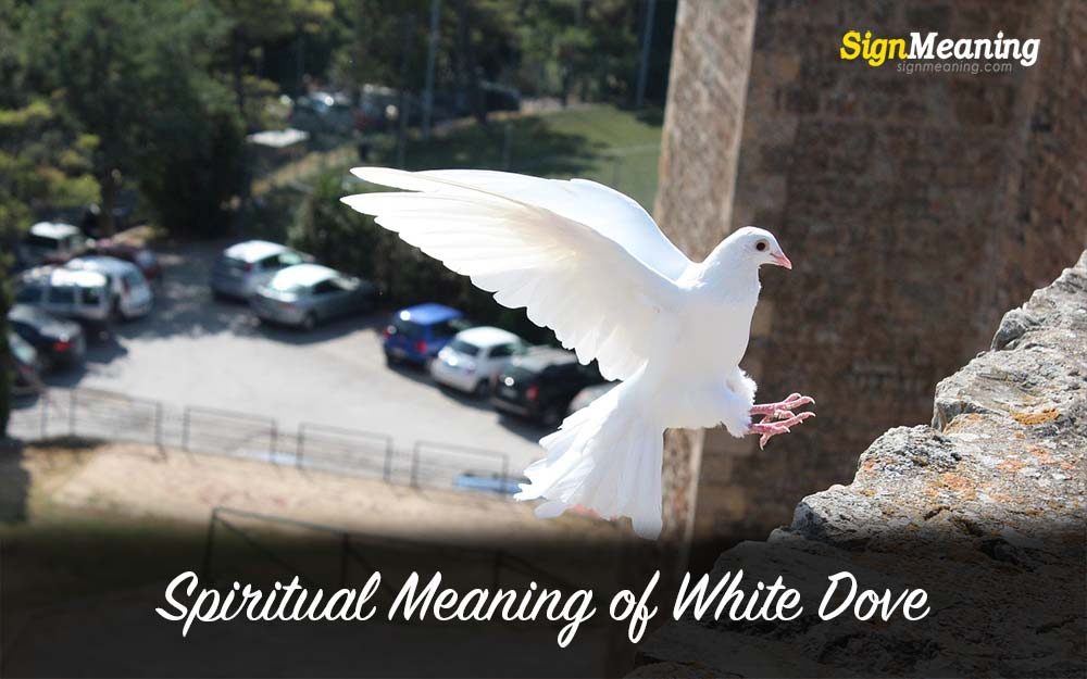 meaning of the white dove