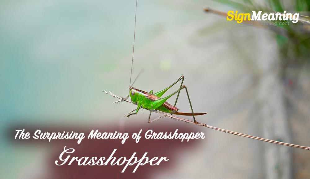 The Surprising Meaning of Grasshopper