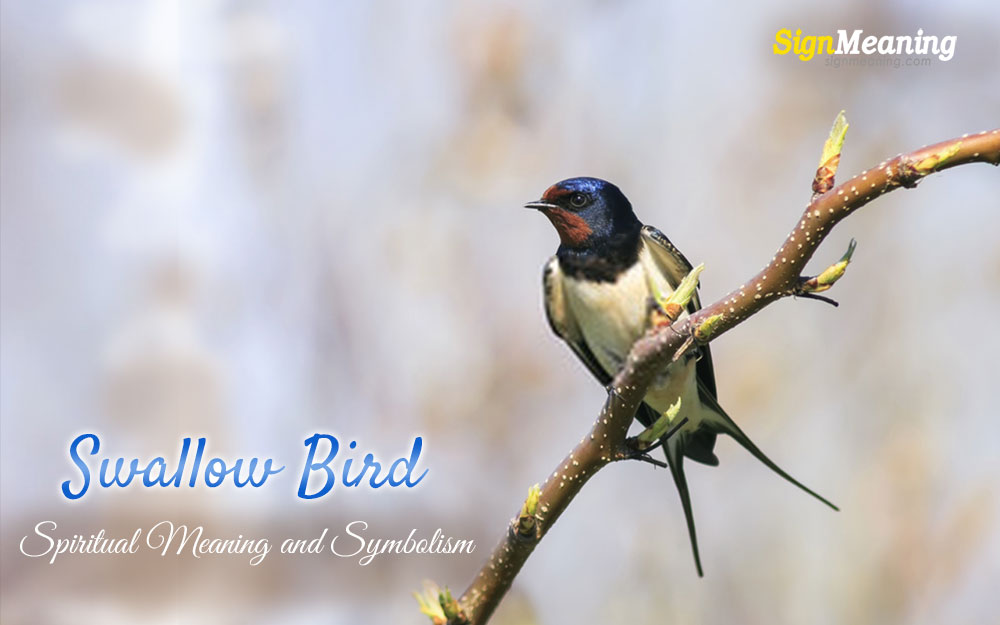 meaning of the swallow bird