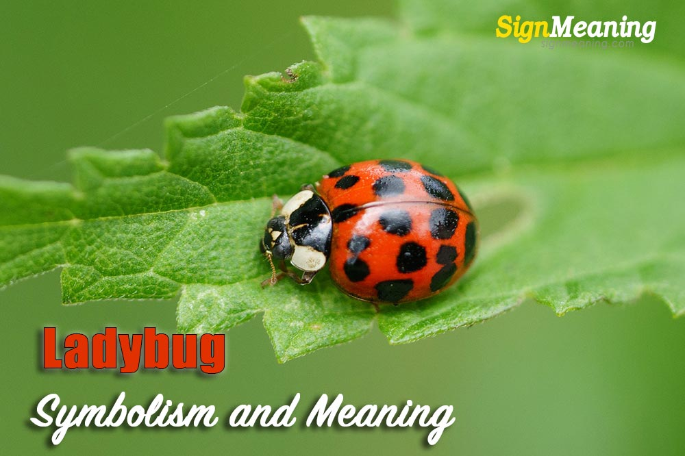 symbolism of ladybugs