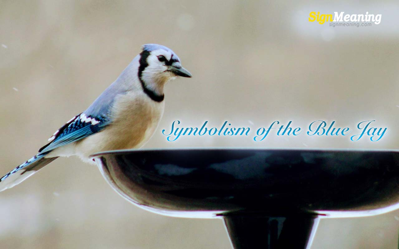 symbolism of the blue jay