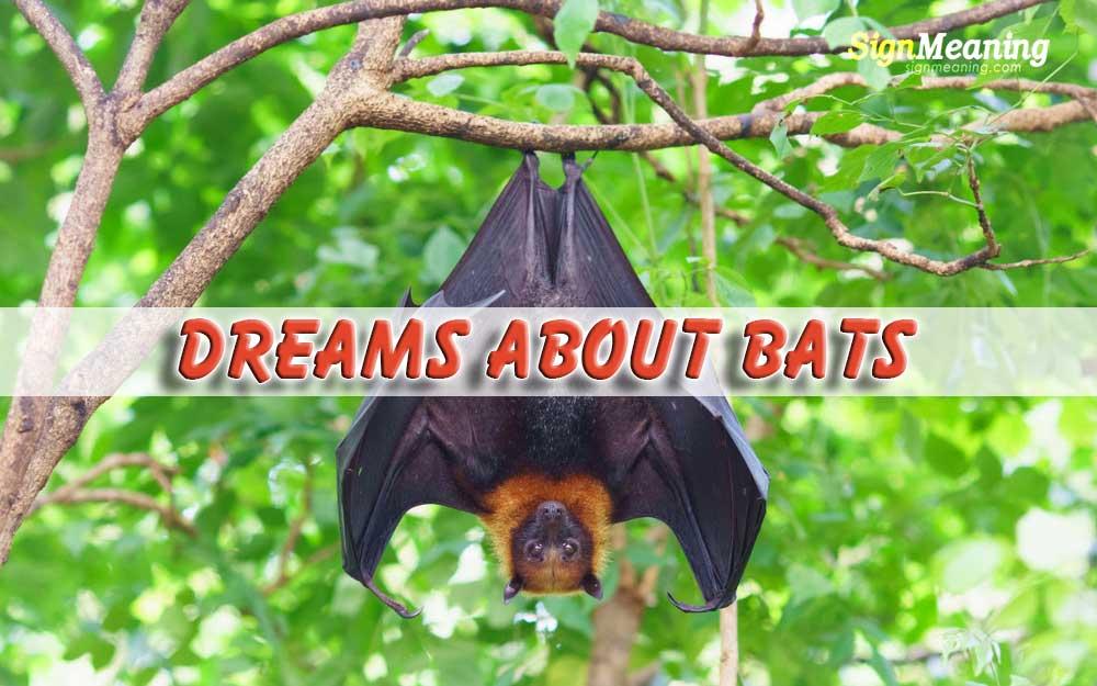 Dreams About Bats