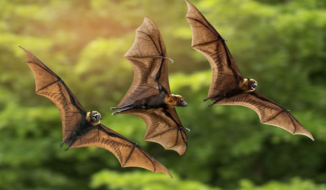 Dream about Bats Flying Around You